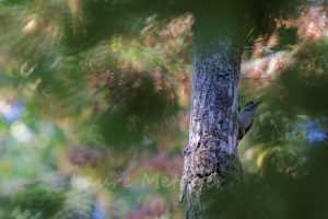 La forêt - pic