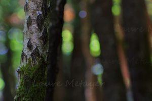 Photographier la forêt